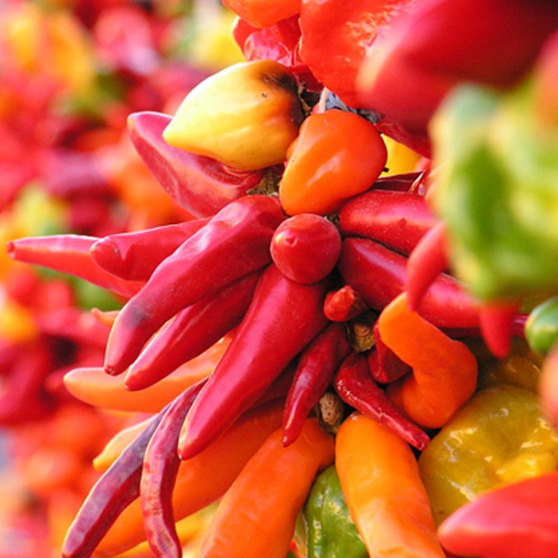 Coltivazione di peperoncini