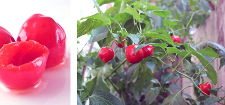 Malawi Piquante Pepper - Capsicum Chinense