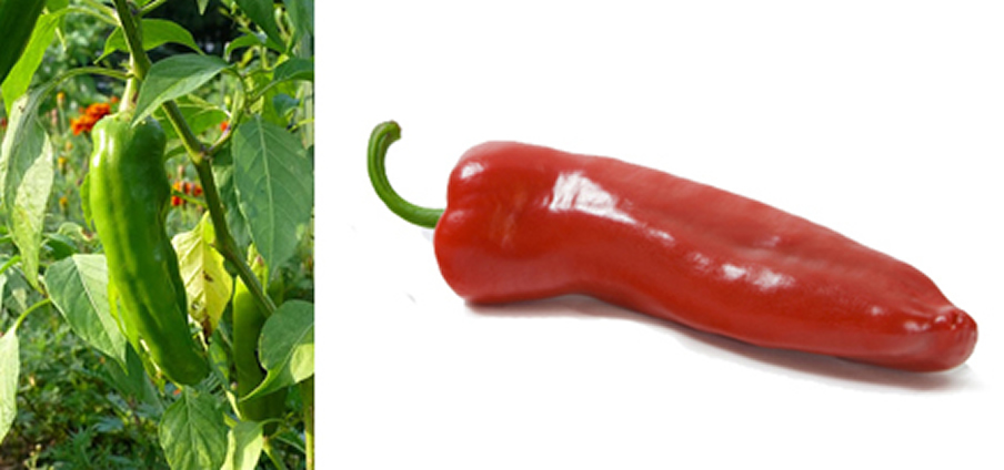 NuMex Big Jim - Capsicum Annuum